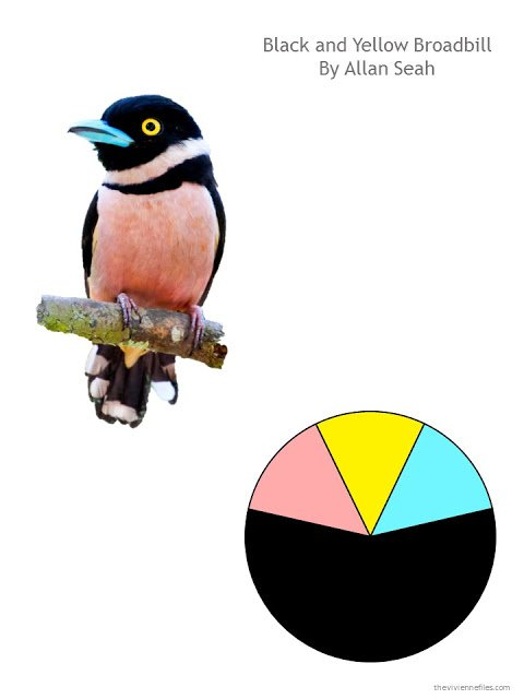 Allan Seah photograph of a black and yellow broadbill, with a color scheme based on the bird's coloring