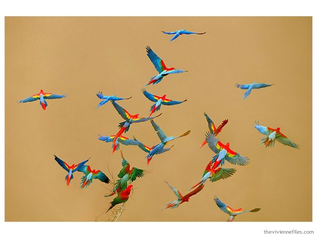 Building a Capsule Wardrobe by Starting with Art: Macaws over River, Peru by Frans Lanting