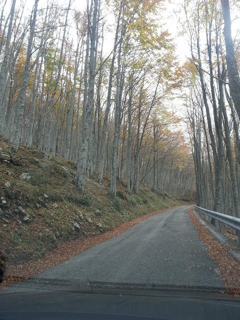 the Abruzzo forest colors in autumn