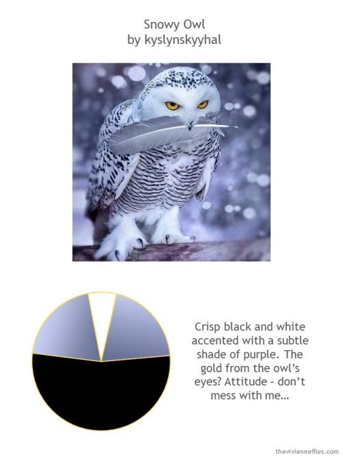 Snowy owl photo with color palette and style guidelines