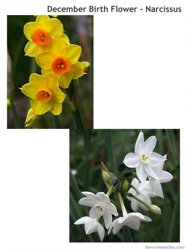1. Narcissus - the December birth flower