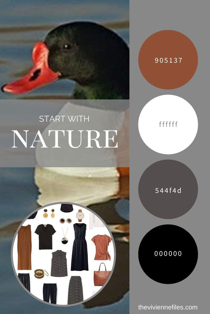 START WITH NATURE_ REVISITING THE COMMON SHELDUCK BY DENNIS A. JONES